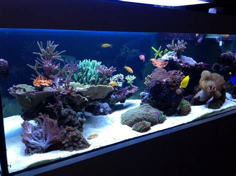 Reef Aquascape by Aquascaping Show Your Skills Page 30 Reef Central Community 120 Tank