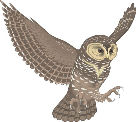 flying owl clipart flying owl for clip owl flying chainimage