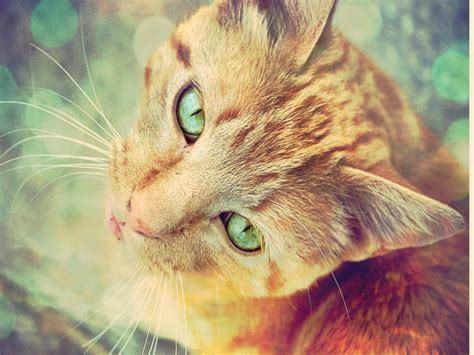 wallpaper cat green cat wallpapers page 13 hd wallpapers images pictures