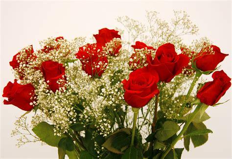 imágenes de rosas rojas naturales ramo de flores de 12 rosas rojas infoflor