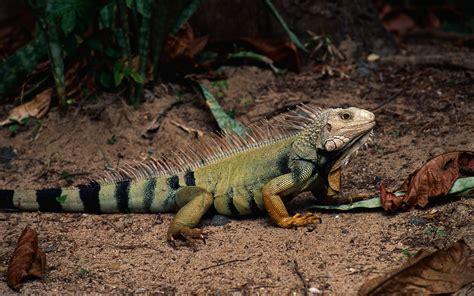 überwachungskamera für tiere die 80 besten fr 252 hlinghafte tiere hintergrundbilder