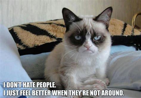 Grumpy Cat Meme Valentines Day - 10 new grumpy cat memes