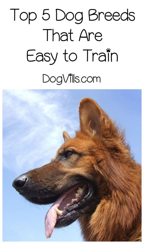 easy to house train dog breeds top 5 dog breeds that are easy to train dogvills