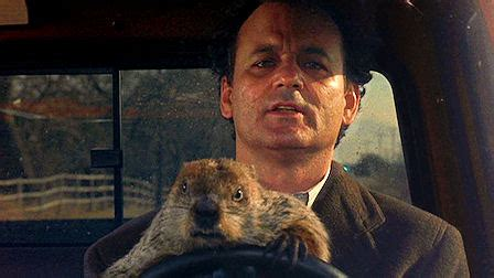groundhog day sinopsis groundhog day critics up