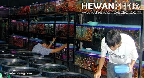 Toko Pakan Ikan Hias Jogja alamat toko ikan hias di jogja hewanpedia