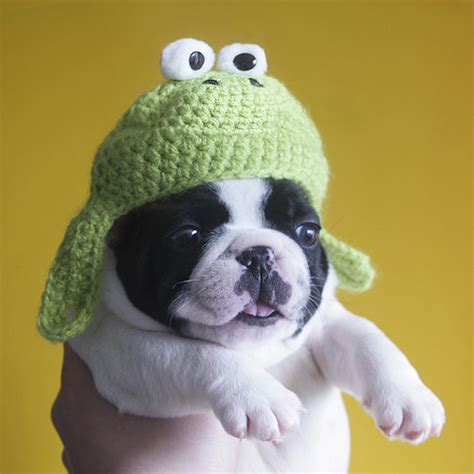 Vase Frog Dog In Hand With A Knit Frog Hat
