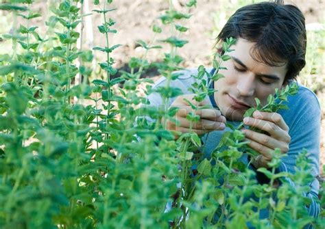 man smelling herbs stock photo colourbox