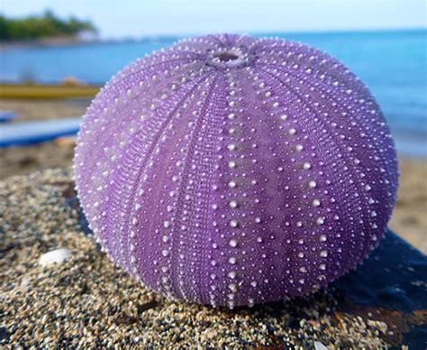 patterns and nature asu sea urchin anatomy ask a biologist