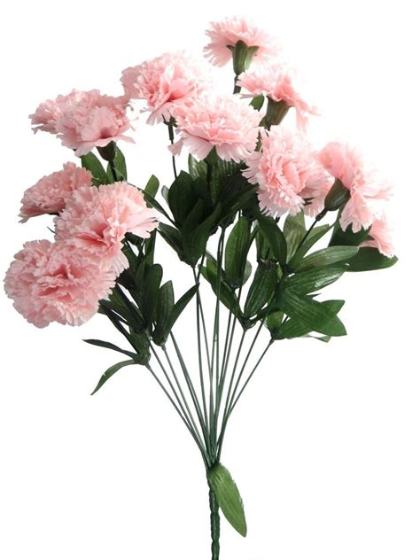 light carnation clipart clipground