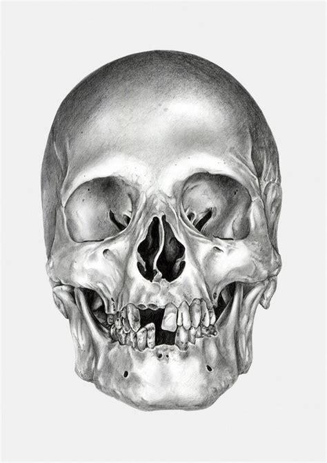 Black And White Skull Drawings The Skull Appreciaton Society Skull On