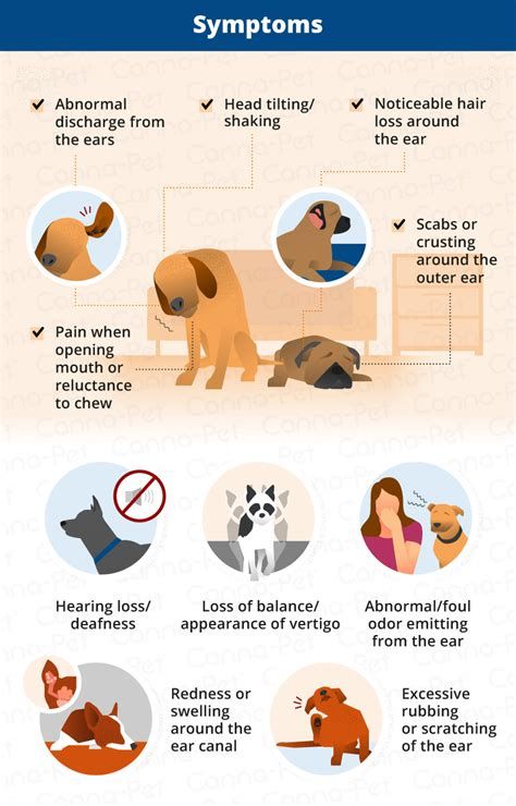 signs of ear infection in dogs ear infections types causes treatment canna pet