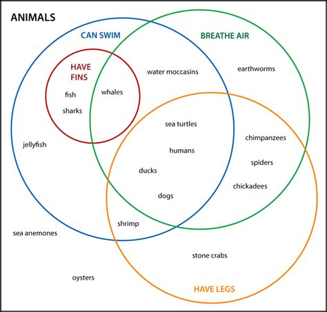 exles of venn diagram in math venn diagram exles diagram site