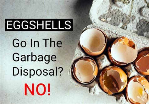 Can You Install A Garbage Disposal On Any Sink by Can You Put Eggshells In The Garbage Disposal Kitchensanity
