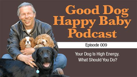 high energy dogs 009 you a high energy what should you do
