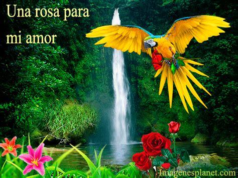 google imagenes hermosas de amor hermosas rosas con dedicatoria para google plus imagenes