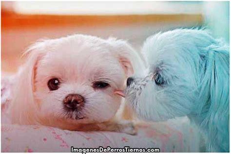 imagenes de perritos tiernos de buenos dias recomendaciones e im 225 genes de perritos s 250 per tiernos