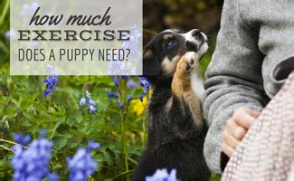 exercise   puppy  caninejournalcom