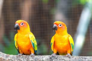 Plumbing A New House sun conures as pets species profile