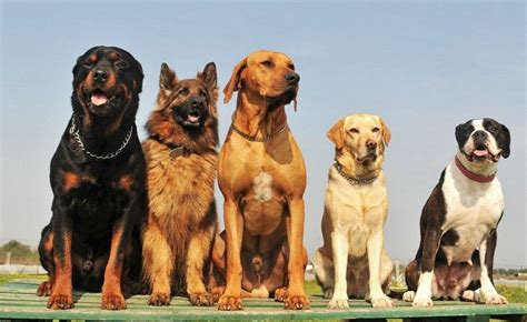 all different dogs what breed is my determining your breed