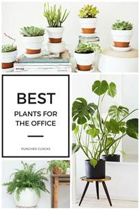 Best Office Desk Plants Plants For Office Office Plants Peaceful White Garden With 10 Things In Your Bedroom