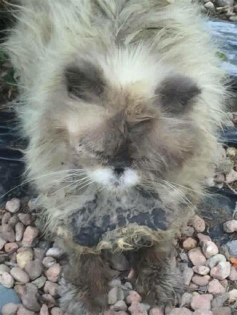 A Cat With Matted Fur by Covered With Thick Matted Fur Couldn T Stop Purring