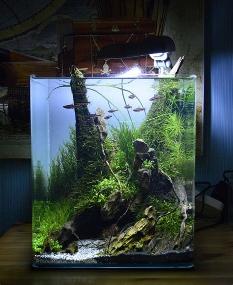 ideas  aquascapesaquariums  pinterest