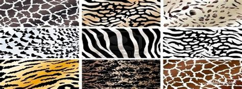 Animal Print Covers by Leopard Print Cover Quotes