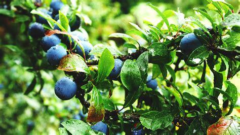 fruit garden the best fruit to grow in your garden