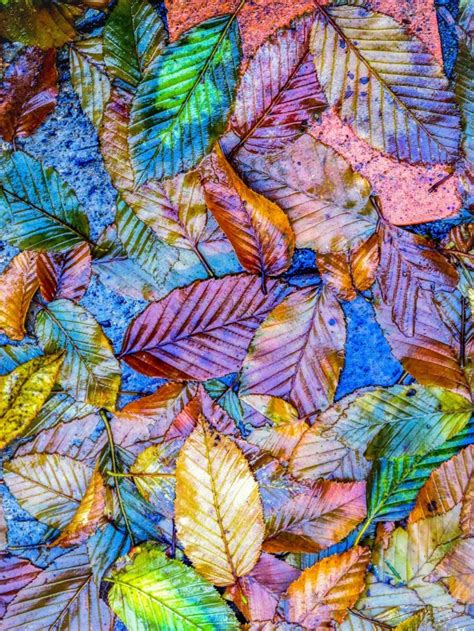 color pattern nature bright bold foliage abstract autumn textures rainy day