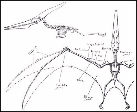 field guide part  pteranodons  birds