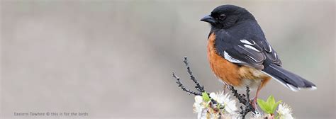 online bird guide bird id help life history bird sounds