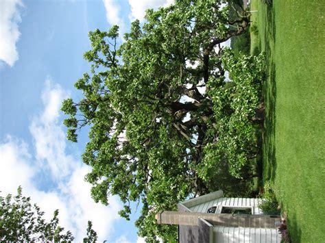 Burr Oak Gardens burr oak gardens