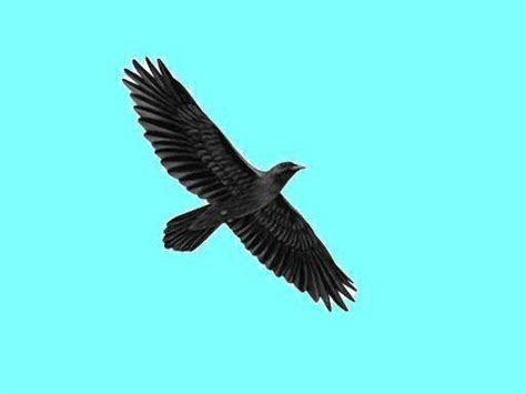 large black birds overhead heaven awaits