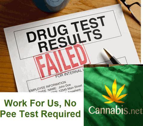 Brand Ambassadors Quiz Mba by Fail A Test Become A Cannabis Brand Ambassador
