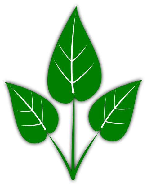 graphics free leaf free leaves clipart free clipart graphics images and