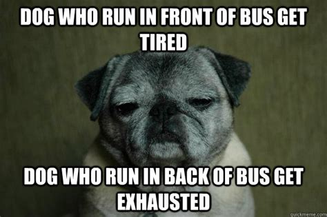 Exhausted Meme - dog who run in front of bus get tired dog who run in back