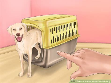 can an older dog be house trained how to house train an older dog with pictures wikihow