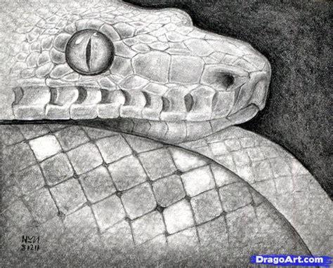 imagenes de serpientes para dibujar a lapiz como dibujar algunos animales realistas parte1 taringa