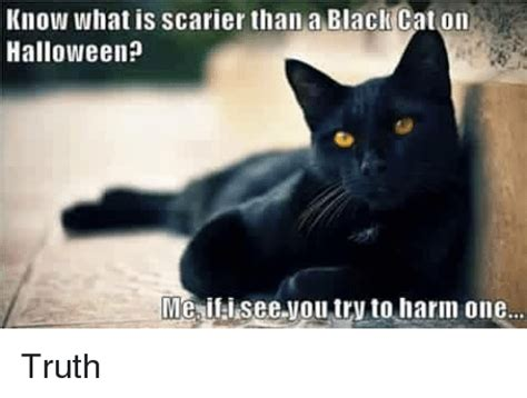 Halloween Cat Meme - 25 best memes about cats and halloween cats and