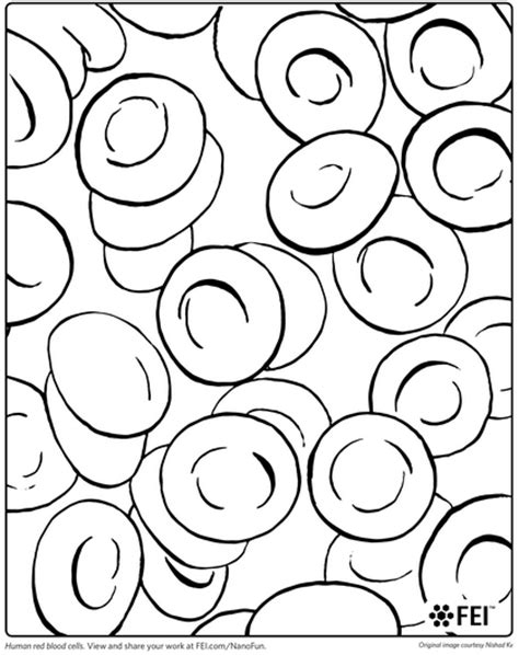 what color is human blood free coloring pages of blood cell