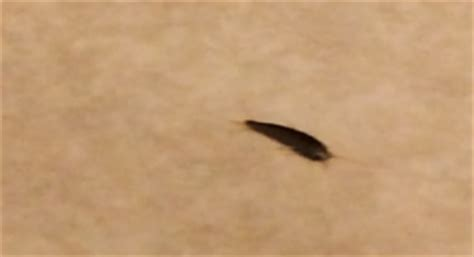 black worm like bug in bathroom brown bug that moves like a fish all about worms
