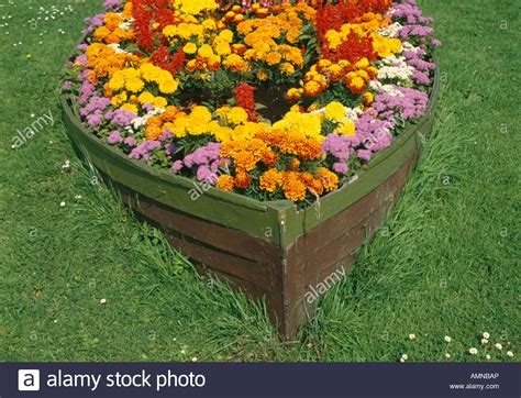 marigold flowers growing in rowing boat hull in garden