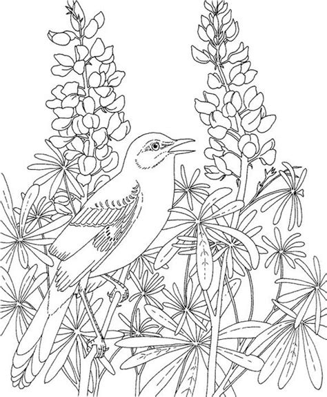 mockingbird coloring pages texas mockingbird coloring page purple kitty
