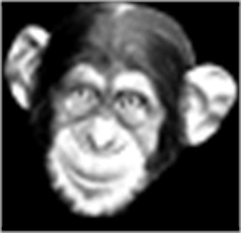 new year monkey animated gif apes chimps gorillas monkey and primate gif animations