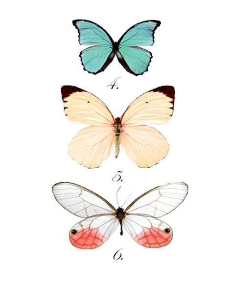 butterfly prints free and lois20 favorite wall free printables