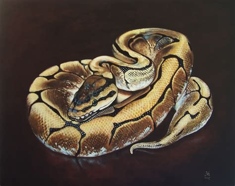 ball python tattoo need your help locating a snake design