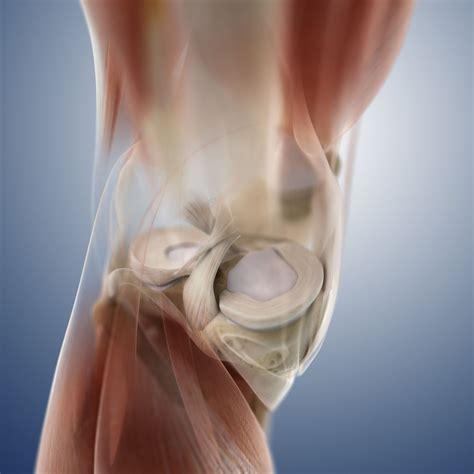 Repairing Torn by Handle Meniscus Tears Of The Knee