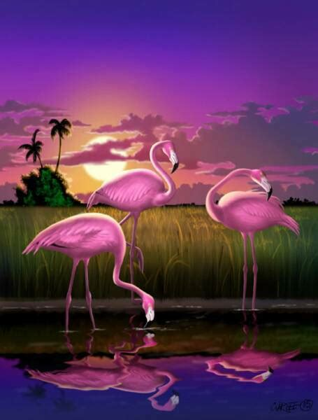 Flamingo Sunset flamingo sunset