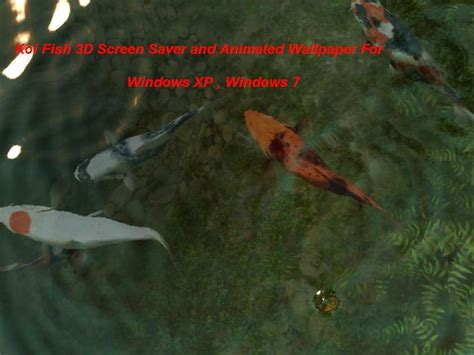 koi live wallpaper for windows 7 koi fish 3d screen saver and animated wallpaper for