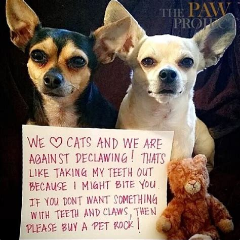 declawing dogs 20 best images about don t declaw on cats cap d agde and do do